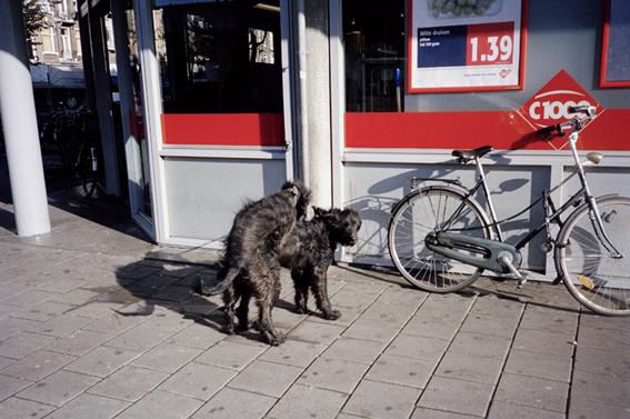 http://www.dennisduijnhouwer.com/files/gimgs/33_dogs02b.jpg