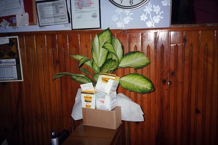 http://www.dennisduijnhouwer.com/files/gimgs/66_plant-diyar01b.jpg