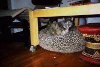 107_like-beasts-cat01b.jpg