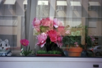 57_fakeplant-window01b.jpg