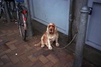 76_doggie-ah01b.jpg