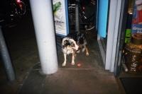 76_doggie-ah01b_v2.jpg