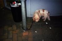 76_doggie-lost01b.jpg