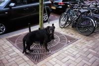 76_doggie02c.jpg