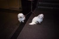 76_doggies-cs01b.jpg