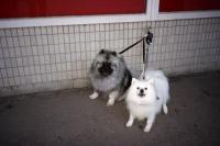 76_doggies-finland01b.jpg