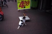 95_doggie-499b.jpg
